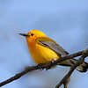 Advanced Ohio Native Animals Catagory